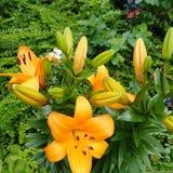 Blumen und Landschaften lizenzfreie stockbilder