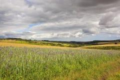 Blumen und landwirtschaftliche Landschaft Stockfotos