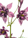Blumen und Makronatur Stockbild