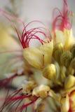 Blumen und Makronatur Lizenzfreies Stockfoto
