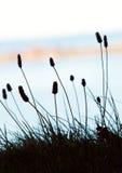 Blumen und Meer Lizenzfreie Stockbilder