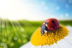 Blumen- und Naturfrühling bokeh Hintergrund Stockfotografie