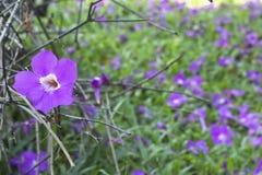 Blumen- und Niederlassungshintergrund Lizenzfreies Stockfoto