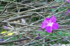 Blumen- und Niederlassungshintergrund Lizenzfreie Stockbilder