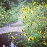 Blumen und Pfützen Lizenzfreies Stockfoto