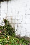 Blumen und Reben auf verwitterter Wand Stockbilder