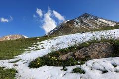 Blumen und Schnee Lizenzfreies Stockfoto