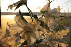 Blumen und Sonnenuntergang Stockfotos