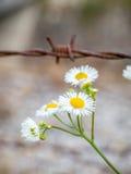 Blumen und Stacheldraht lizenzfreie stockfotos