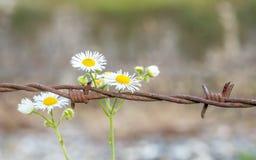 Blumen und Stacheldraht stockfotografie
