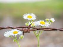 Blumen und Stacheldraht stockfoto