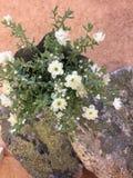 Blumen und Stein Stockbild