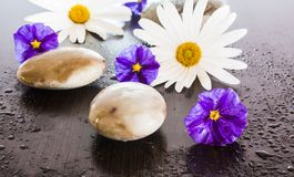 Blumen und Steine stockfotografie