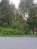 Blumen und Wald in Kanada stockfotos