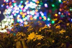 Blumen- und Weihnachtslicht bokeh Lizenzfreie Stockbilder