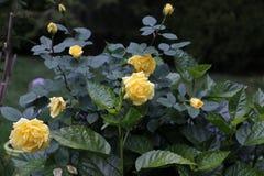 Blumen in unserem Hinterhof Stockfoto
