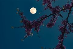 Blumen unter dem Mond Lizenzfreie Stockbilder
