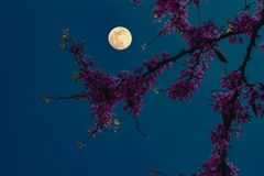 Blumen unter dem Mondschein Lizenzfreies Stockfoto