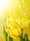 Blumen unter Goldmagieregen Stockfotografie