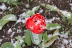 Blumen unter Schnee Stockfotos