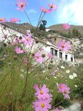 Blumen unter Sonne in Tibet lizenzfreie stockbilder