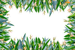 Blumen-voller Rahmen Lizenzfreies Stockfoto