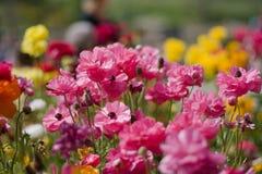 Blumen vom botanischen Garten Lizenzfreies Stockfoto