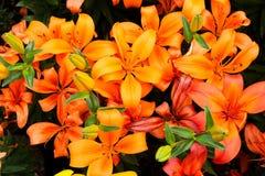 Blumen von Atlixco lizenzfreie stockbilder