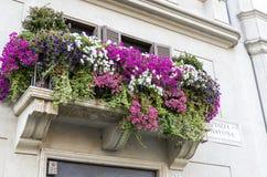 Blumen von einem Fenster eines Hauses im Marktplatz Navona Stockfotos