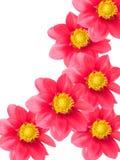 Blumen von einem Garten lizenzfreies stockbild