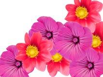Blumen von einem Garten lizenzfreies stockfoto