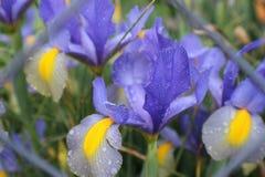 Blumen von Farben Stockfotos