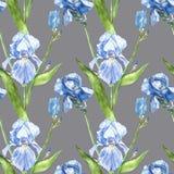Blumen von Iris Gezeichnete botanische Illustration des Aquarells Hand von Blumen Nahtloses Muster Lizenzfreies Stockbild