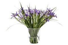 Blumen von Iris pseudacorus im Glasvase, lokalisiert auf Weißrückseite Lizenzfreies Stockfoto