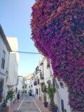 Blumen von Marbella stockfoto