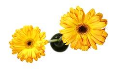 Blumen von oben Lizenzfreies Stockbild