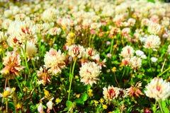 Blumen von Südamerika Lizenzfreies Stockfoto