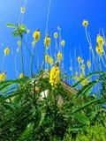 Blumen von Torrevieja stockbilder