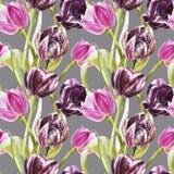 Blumen von Tulpen Gezeichnete botanische Illustration des Aquarells Hand von Blumen Nahtloses Muster Lizenzfreies Stockfoto