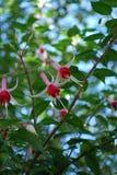 Blumen von unterhalb lizenzfreie stockfotos