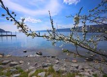 Blumen vor dem Bodensee Stockfoto
