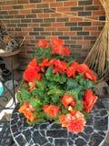 Blumen vor dem Haus Stockfotografie