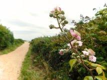 Blumen vor einem Weg lizenzfreie stockfotos