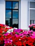 Blumen vor Fenster Stockfoto