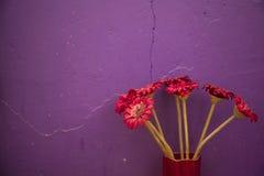 Blumen vor Wand Stockbild