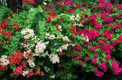 Blumen-Wand Stockbild