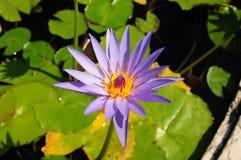 Blumen-Wasser Stockfotos