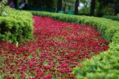 Blumen-Weg Stockbilder