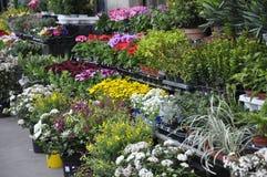 Blumen werden im Stadtzentrum verkauft Stockfotografie