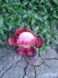 Blumen-Wesentliches Lizenzfreie Stockfotos